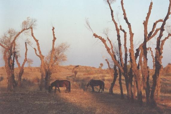 Wolaanhuq horse 2,Desert willows S